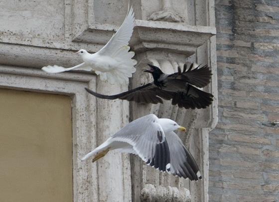 和平鴿遭烏鴉和海鷗無情夾擊