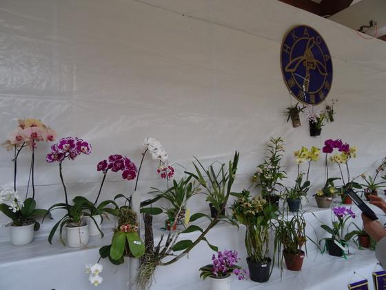 香港蘭藝會展出的部分蘭花